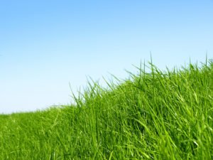 Your Spring Lawn